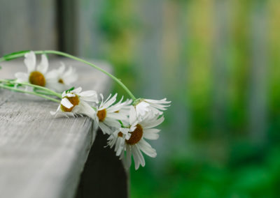 daisies lie on a wooden podium